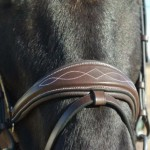 Royal Noseband